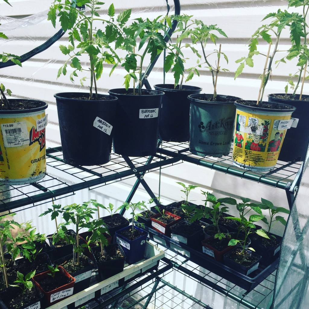 TomatoesTeens